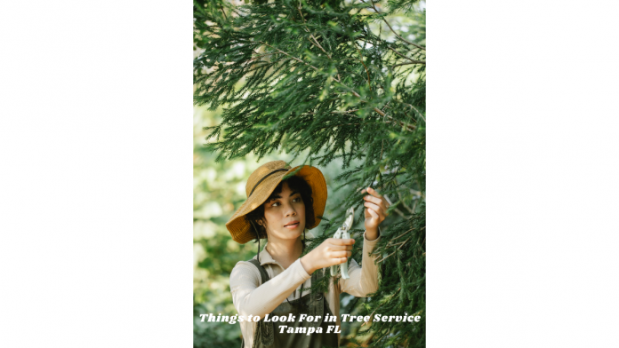 Things to Look For in Tree Service Tampa FL