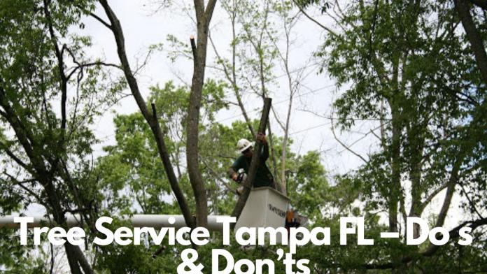 Tree Service Tampa FL – Do's & Don'ts